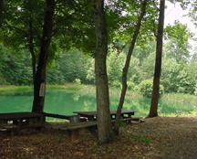 Cedar Mountain Campground - Picnic Area